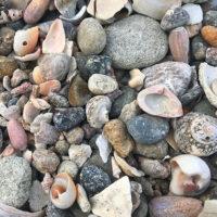 貝と石ころ